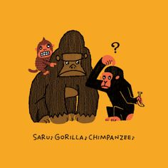 Monkey Gorilla Chimpanzee