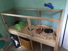 Picture of Build a Guinea Pig cage with EASY cleaning! (Projects with kids)