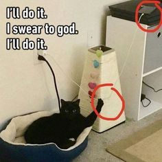 Add More Awesomeness To Your Caturday With These 15 Hilarious Memes - World's largest collection of cat memes and other animals Crazy Funny Memes, Really Funny Memes, Funny Relatable Memes, Haha Funny, True Memes, Hilarious Memes, Funny Laugh, Funny Stuff, Funny Animal Jokes