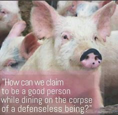 Please think about this! Don't just love your pets. Love all animals and saves thousands of lives by going vegan ~ it's SO FREAKING EASY Reasons To Be Vegan, Vegan Quotes, Vegetarian Quotes, Why Vegan, Stop Animal Cruelty, Love Your Pet, Vegan Animals, Save Animals, Tier Fotos