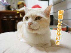日曜日の3猫|うにオフィシャルブログ「うにの秘密基地」Powered by Ameba