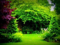 I always dreamed of finding a secret garden, this would be the view when you first open the hidden gate.