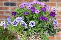 Learn how to create a beautiful hanging basket display of osteospermum, petunia and verbena, with expert advice from gardenersworld.com.