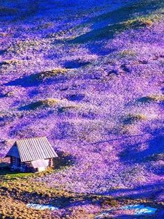 Beautiful Crocuses in the Tatra Valley, Poland. My mother's favorite spring flower. Places Around The World, Around The Worlds, Beautiful World, Beautiful Places, Polish Mountains, Poland Travel, Krakow Poland, Reisen In Europa, World Pictures