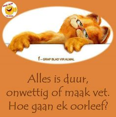 Alles is duur, onwettig of maak vet. Afrikaanse Quotes, Dog Food Recipes, Funny Quotes, Humor, Rio, Crafts, Funny Phrases, Manualidades, Funny Qoutes