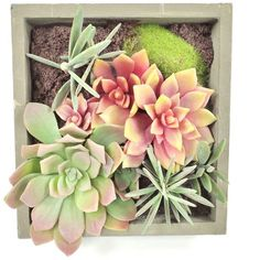 Gold Eagle Mixed Succulents Square Wall Planter ($66) ❤ liked on Polyvore featuring home, home decor, filler and green