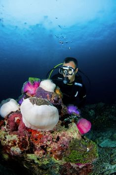 Beautiful underwater diving in the Maldives. Can't wait to get certified ! Life Under The Sea, Under The Ocean, Visit Maldives, Surf Trip, Surf Travel, Underwater Life, Winter Photos, Exotic Fish, Underwater Photography