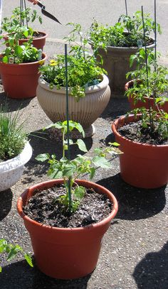 Even if you don't have a garden you can still enjoy growing your own in containers