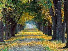 Beneficios de lo árboles para el medio ambiente.   Imagen: Tree-Lined-Roadway-Louisville,-Kentucky