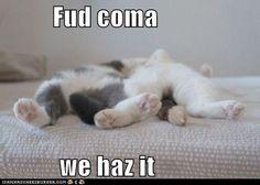Fud coma.  We haz it.