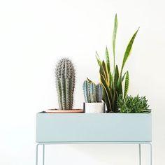 Cactus Hans voelt zich al helemaal thuis bij ons ! Fijn weekend allemaal! Hebben jullie nog leuke plannen?