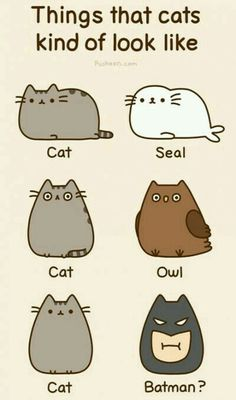 Pusheen things that cats look like