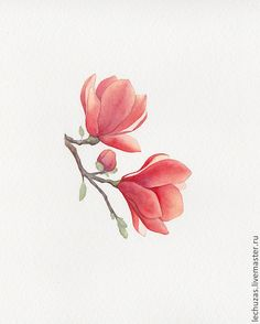 Buy or order Watercolor Blooming. Watercolor Print, Watercolour Painting, Watercolor Flowers, Painting & Drawing, Botanical Drawings, Botanical Illustration, Botanical Prints, Magnolia Tattoo, Plant Drawing