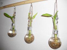 Light bulbs as window planters with Lucky Bamboo
