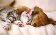 Dogs and Cats hugging it out.
