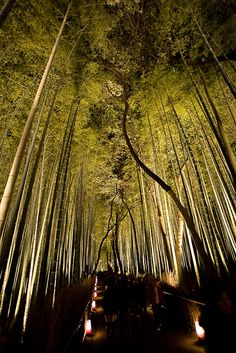 Bamboo forest at night in Arashiyama, Kyoto, Japan
