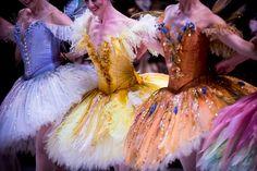 Artists of The Australian Ballet in David McAllister's The Sleeping Beauty. Design by Gabriela Tylesova. Photography Kate Longley