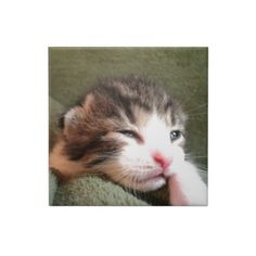 Dark Calico Kitten Tiles!  Cuteness overload!  Lots of cat stuff and the store has a new look!  Check it out!  http://www.zazzle.com/conquestkitty*