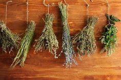 Doctor Natura: Uscarea plantelor condimentare