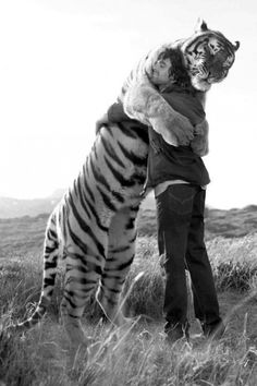i remember this story:) so sweet this man raised the orphan tiger at a sanctuary then released him when he was grown and went to look for him 3 yrs later and this is what happened when they found eachother