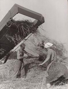 Martin Martinček: Stohovanie I.:1956 - 1957 ~ (separating the wheat from the chaff?)