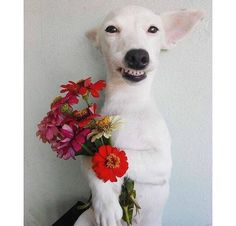 smile dog with flowers