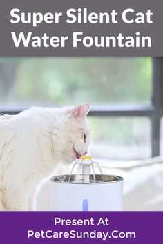Cats struggle with sufficient levels of hydration, too. This product will fix the issue of drinking water well for pets and you don't have to think about not preparing drinking water for pets while you're busy with the job. This creative fountain inspires your pet to drink more water, with a fun concept keeping her safe and hydrated. Outdoor works also encourage pets to enjoy the sun. #petwaterfountain #catwaterfountain #bestpetsafewaterfountains #catwaterfountainstainlesssteel Cat Water Fountain, Drink More Water, Water Well, Enjoying The Sun, Pet Safe, Drinking Water, Concept, Pets, Creative