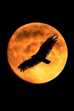 El Espíritu de la luna