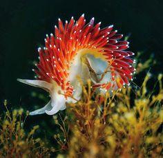 Deep Sea Creatures, Alien Creatures, Sea Slug, Underwater Life, Oceans Of The World, Colorful Animals, Saltwater Aquarium, Fish Art, Underwater Photography
