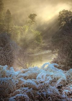 Mist on a frosty morning