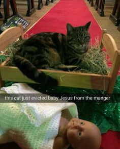 Cats are devious funny pics, funny gifs, funny videos, funny memes, funny jokes. LOL Pics app is for iOS, Android, iPhone, iPod, iPad, Tablet