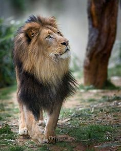 Strong a King Follow @destination_wild for more amazing wildlife and animals photos @destination_wild #Wildgeography