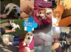 Some of the Burford teams paw/hood bumps this week! Show your for us and post your pic with your pet! Blue Cross, Pictures Of You, Pets, Animals, Animales, Animaux, Animal, Animais, Animals And Pets