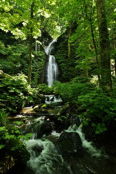 Oirase, Aomori, Japan I want to meditate here and dance under the waterfall and love and do get away from all the work i should be doing now