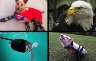 12 Special Needs Animals That Survived and Thrived