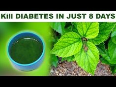 Goodbye to diabetes, cholesterol, triglycerides, fat in the belly and ulcers just using the leaves o - YouTube