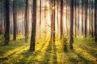 Woodlands Fragrance Oil