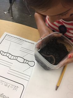 Our study of decomposition led us to explore and write a nonfiction, all about piece of writing on worms. Find out how we got there through this inquiry-based project in our kindergarten classroom. Kindergarten Projects, Kindergarten Science, Kindergarten Classroom, Classroom Ideas, Inquiry Based Learning, Project Based Learning, Learning Activities, Teaching Ideas, Teaching Drawing