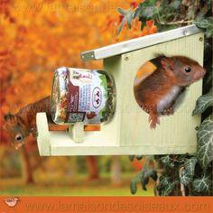 Refuge parfaitement étudié pour nourrir les écureuils avec des friandises. En pin traité et toit recouvert de zinc. Dim 25 x 12 x H 19 cm.