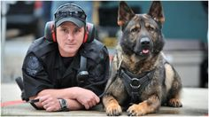 Police Officers Are Doing This To Protect Their K9 Coworkers – AngusPost