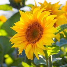 10 καλοκαιρινά λουλούδια που κλέβουν την παράσταση! Plants, Gardening, Garten, Planters, Lawn And Garden, Garden, Plant, Planting, Square Foot Gardening