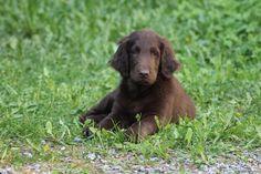 """Ruffe 2,5month puppy  :)"