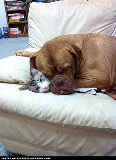 "Aw, they are friends! Looks like the dog from ""Turner and Hooch"" too."