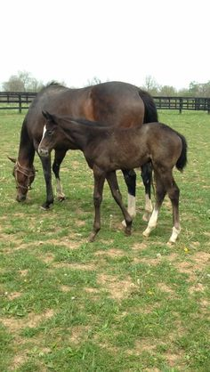 Believe You Can & her 2016 Tapit filly