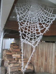 Spiderweb coated in a layer of frost