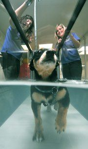 Jake, a Chihuahua/Jack Russell mix, came to HydroPaws last November with a severe spinal injury that had left him paralyzed. A year later, Jake can walk on all fours again, thanks to myriad physical rehab techniques, including hydrotherapy. Also pictured are Director of Animal Rehabilitation Karen Atlas (right) and Physical Rehabilitation Assistant Kim Hatcher.