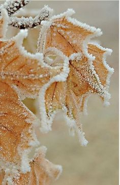 Frosty winter image you can recreate by spraying water onto a bunch of leaves.