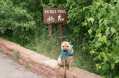 The pretty Pa'rus Trail in Zion National Park is dog friendly -- yay!