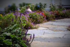 Cranesbill (Geranium 'Rozanne'), Coral Bells (Heuchera micrantha 'Palace Purple'), Hardy Sage (Salvia nemerosa 'May Night').  Stonework: Curtis Gray  Garden Design & Photography: michaela medina - thegardenerseden.com