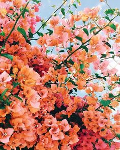 flower aesthetic Spring has sprung and all feels right in the world Spring Aesthetic, Orange Aesthetic, Nature Aesthetic, Flower Aesthetic, Aesthetic Drawing, Aesthetic Vintage, Cute Wallpaper Backgrounds, Flower Wallpaper, Spring Flowers Wallpaper